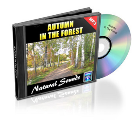 Product picture Natural Sounds: Autumn In The Forest - Royalty Free MP3